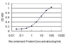 Anti-ERH Mouse Monoclonal Antibody