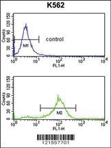 Anti-SFRP1 Rabbit Polyclonal Antibody