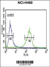 Anti-SPG20 Rabbit Polyclonal Antibody