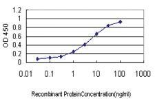 Anti-FBXO22 Mouse Monoclonal Antibody