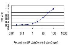Anti-FBXW7 Mouse Monoclonal Antibody