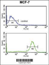 Anti-CHPF Rabbit Polyclonal Antibody