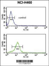 Anti-ESRRB Rabbit Polyclonal Antibody
