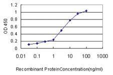 Anti-FKBP5 Mouse Monoclonal Antibody