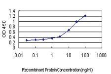 Anti-GADD45G Mouse Monoclonal Antibody