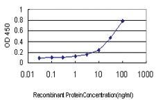 Anti-GAPDHS Mouse Monoclonal Antibody
