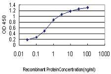 Anti-GAS2L3 Mouse Monoclonal Antibody