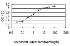 Anti-MCHR1 Mouse Monoclonal Antibody