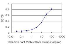 Anti-GRID2 Mouse Monoclonal Antibody