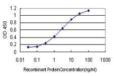 Anti-GSTO1 Mouse Monoclonal Antibody