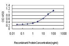 Anti-HBB Mouse Monoclonal Antibody