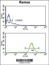 Anti-EIF2A Rabbit Polyclonal Antibody