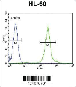 Anti-FANCC Rabbit Polyclonal Antibody