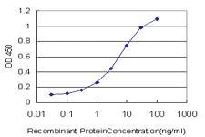 Anti-HEPH Mouse Monoclonal Antibody