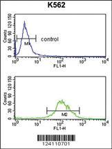 Anti-TAT Rabbit Polyclonal Antibody