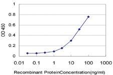 Anti-HRSP12 Mouse Monoclonal Antibody