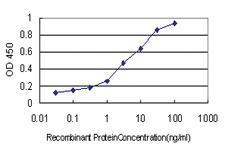 Anti-HSPB7 Mouse Monoclonal Antibody