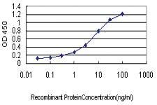 Anti-HYI Mouse Monoclonal Antibody