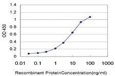 Anti-IFNE Mouse Monoclonal Antibody