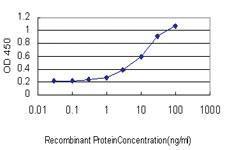 Anti-JMJD1C Mouse Monoclonal Antibody