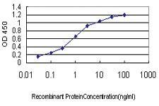 Anti-KCNA3 Mouse Monoclonal Antibody