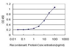 Anti-KCNG3 Mouse Monoclonal Antibody
