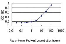 Anti-KLRC3 Mouse Monoclonal Antibody