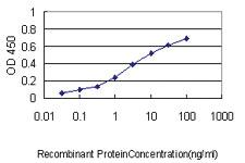 Anti-NDC80 Mouse Monoclonal Antibody