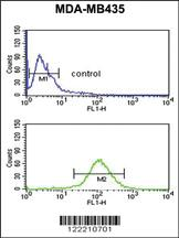Anti-NARFL Rabbit Polyclonal Antibody