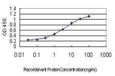 Anti-LEP Mouse Monoclonal Antibody