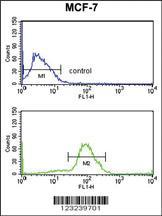 Anti-CDC73 Rabbit Polyclonal Antibody