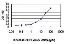 Anti-LMO3 Mouse Monoclonal Antibody