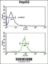 Anti-CDH20 Rabbit Polyclonal Antibody