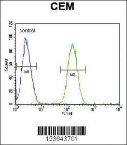 Anti-WAS Rabbit Polyclonal Antibody