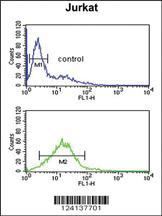 Anti-PLB-T17 Rabbit Polyclonal Antibody