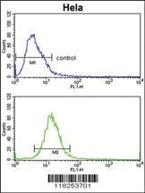 Anti-ADH6 Rabbit Polyclonal Antibody