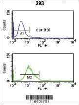 Anti-CYP3A43 Rabbit Polyclonal Antibody