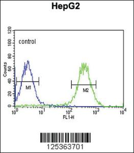 Anti-ARSI Rabbit Polyclonal Antibody