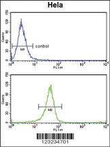 Anti-TSPAN6 Rabbit Polyclonal Antibody
