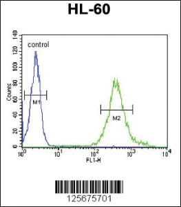 Anti-M11D1 Rabbit Polyclonal Antibody