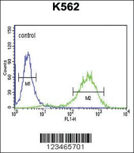 Anti-CLDN18 Rabbit Polyclonal Antibody