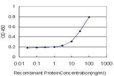 Anti-TRIM52 Mouse Monoclonal Antibody