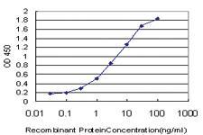 Anti-TRPV5 Mouse Monoclonal Antibody