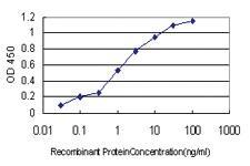 Anti-TXNL4A Mouse Monoclonal Antibody