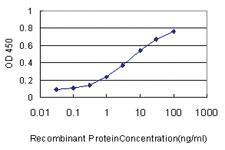 Anti-WNK2 Mouse Monoclonal Antibody
