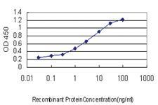 Anti-YWHAH Mouse Monoclonal Antibody
