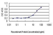 Anti-ZNF37A Mouse Monoclonal Antibody