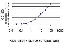 Anti-MAD2L1 Mouse Monoclonal Antibody