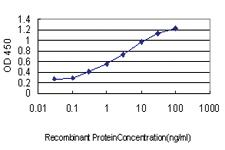 Anti-MAF Mouse Monoclonal Antibody