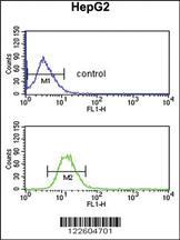 Anti-EFEMP2 Rabbit Polyclonal Antibody